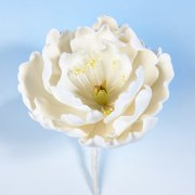 White Peony B sugar flower head cake decoration - Tamworth